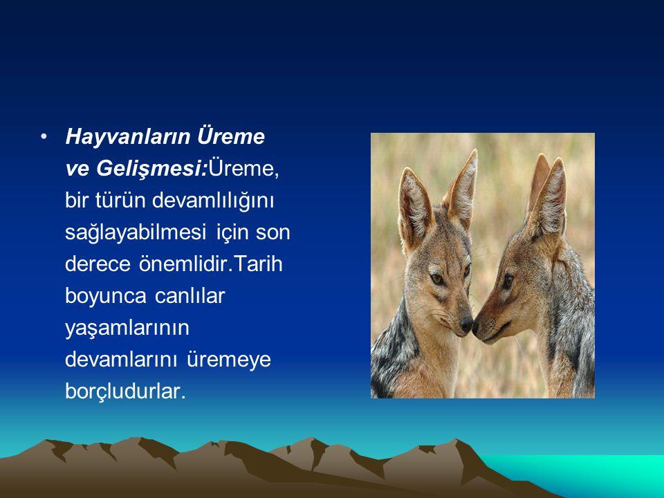 Hayvanların Üreme ve Gelişmesi:Üreme, bir türün devamlılığını sağlayabilmesi için son derece önemlidir.Tarih boyunca canlılar yaşamlarının devamlarını üremeye borçludurlar.