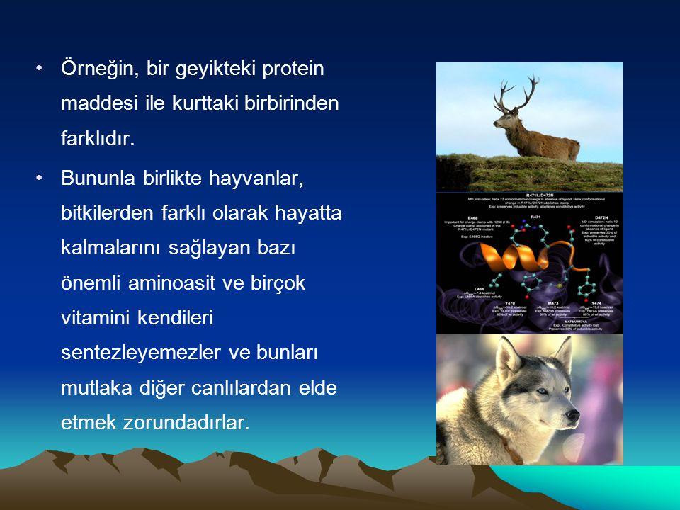Örneğin, bir geyikteki protein maddesi ile kurttaki birbirinden farklıdır.