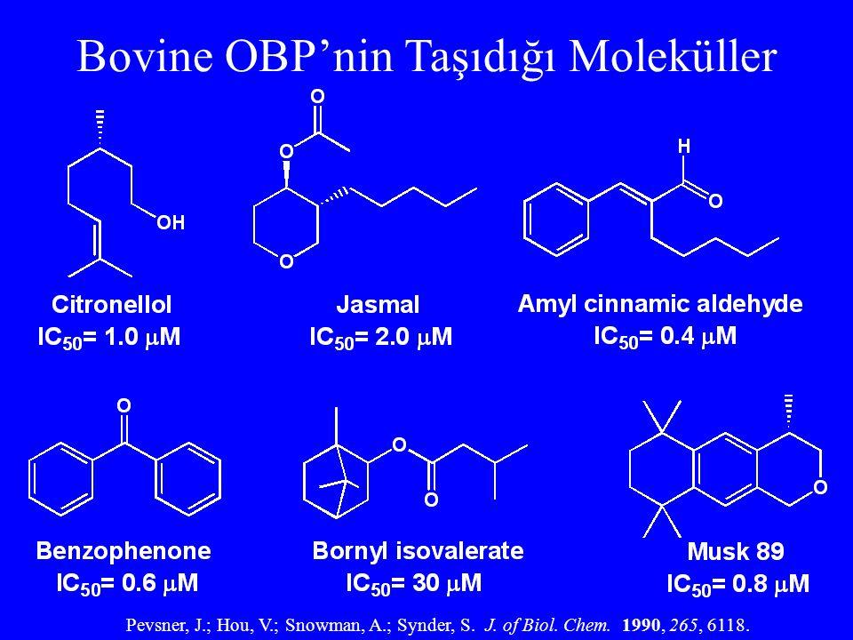 Bovine OBP'nin Taşıdığı Moleküller