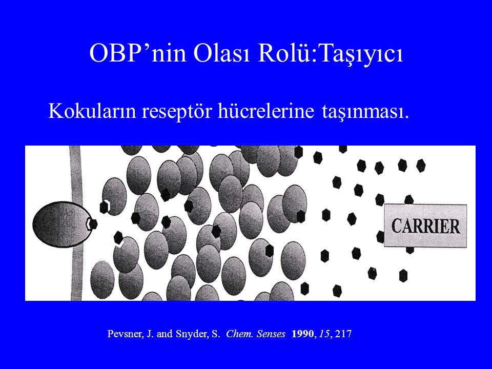OBP'nin Olası Rolü:Taşıyıcı