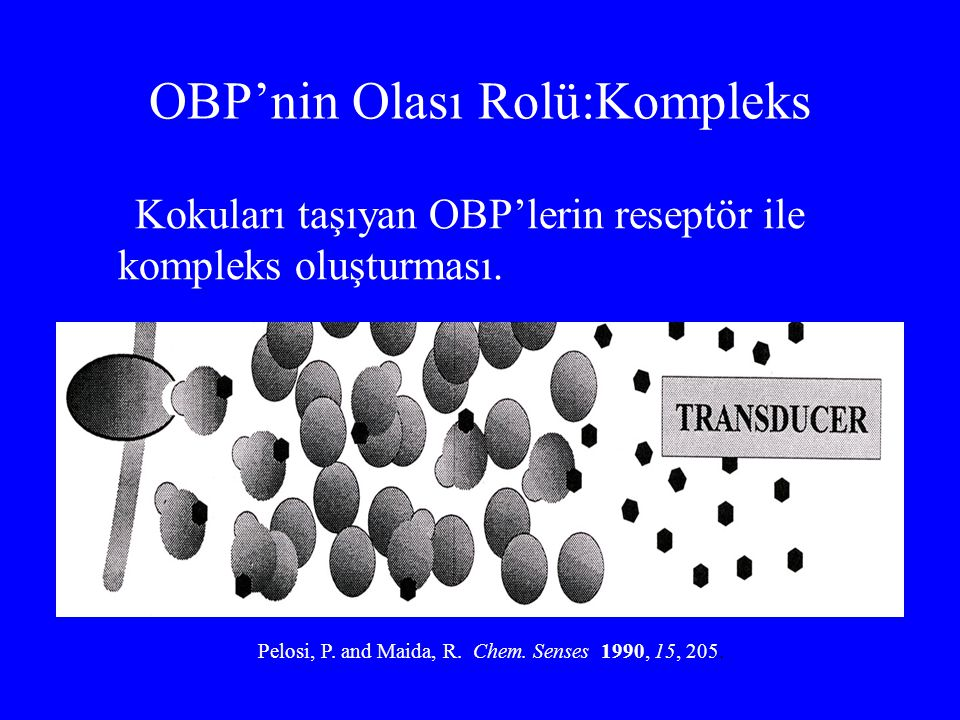 OBP'nin Olası Rolü:Kompleks