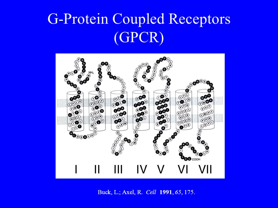 G-Protein Coupled Receptors (GPCR)