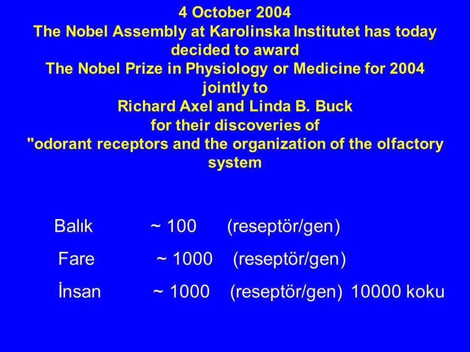 İnsan ~ 1000 (reseptör/gen) 10000 koku