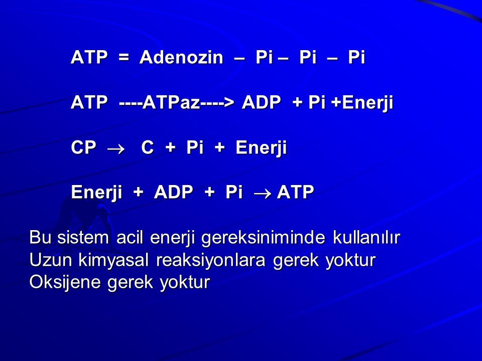 ATP = Adenozin – Pi – Pi – Pi ATP ----ATPaz----> ADP + Pi +Enerji CP  C + Pi + Enerji Enerji + ADP + Pi  ATP Bu sistem acil enerji gereksiniminde kullanılır Uzun kimyasal reaksiyonlara gerek yoktur Oksijene gerek yoktur