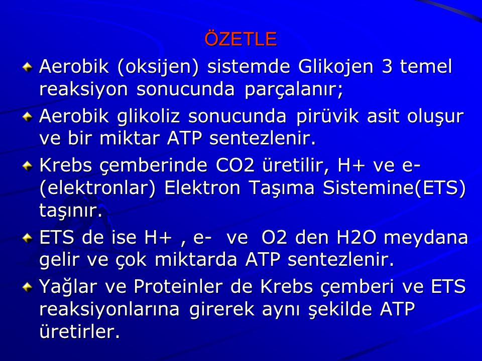 ÖZETLE Aerobik (oksijen) sistemde Glikojen 3 temel reaksiyon sonucunda parçalanır;