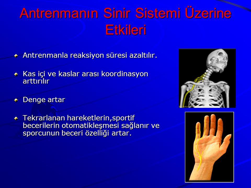 Antrenmanın Sinir Sistemi Üzerine Etkileri
