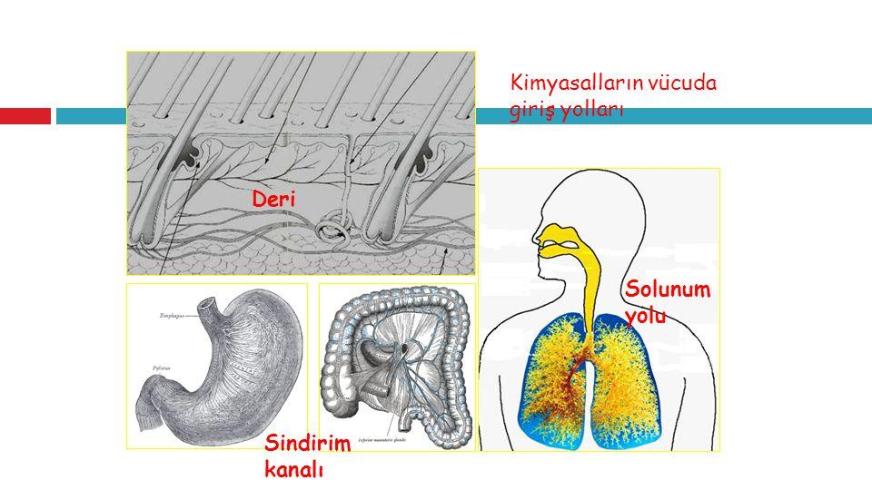 Kimyasalların vücuda giriş yolları