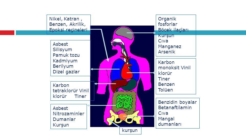 Organik fosforlar Böcek ilaçları Kurşun Cıva Manganez Arsenik
