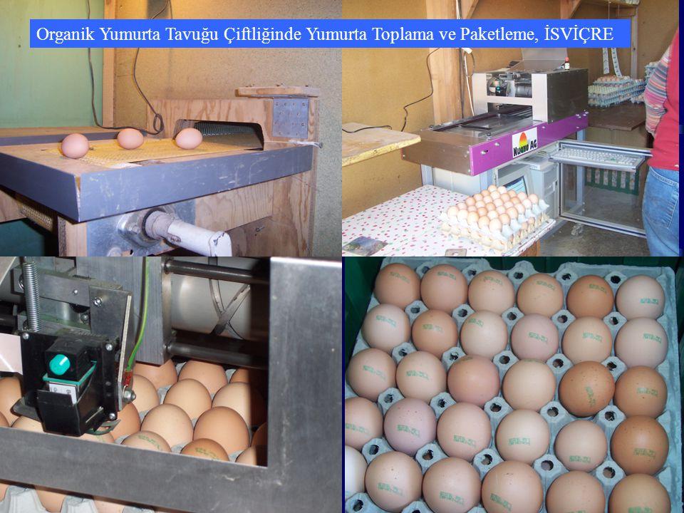 Organik Yumurta Tavuğu Çiftliğinde Yumurta Toplama ve Paketleme, İSVİÇRE