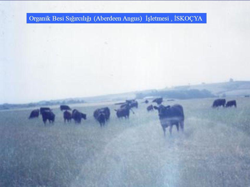 Organik Besi Sığırcılığı (Aberdeen Angus) İşletmesi , İSKOÇYA