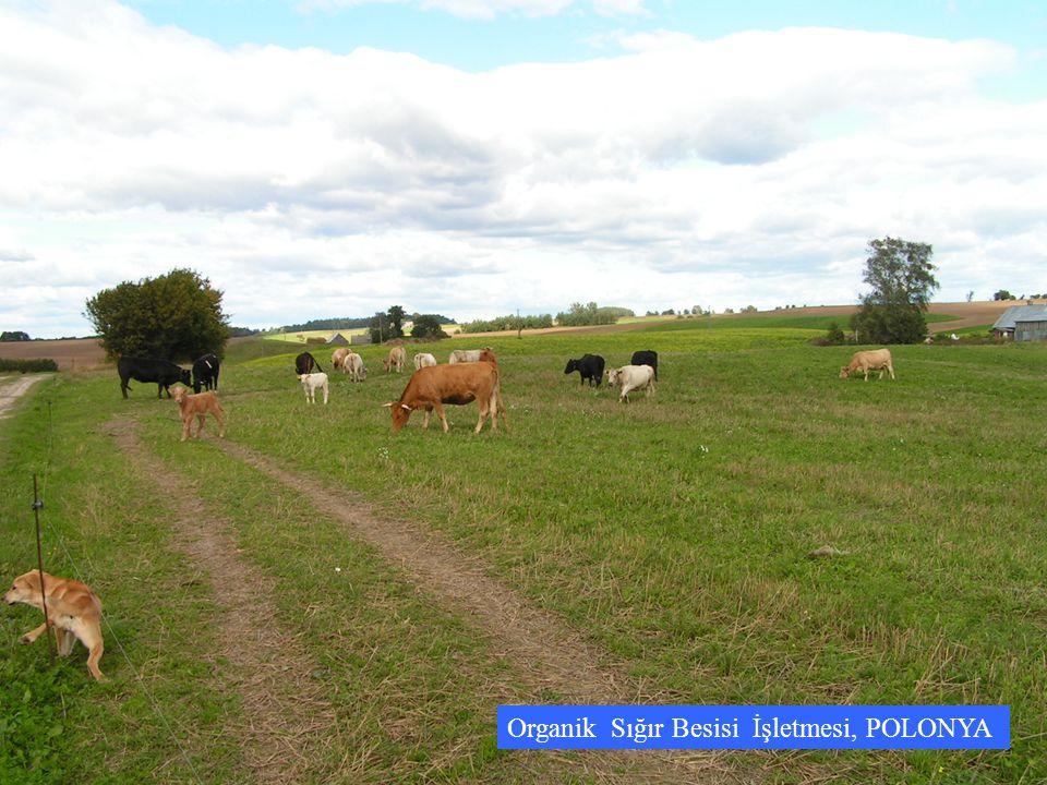 Organik Sığır Besisi İşletmesi, POLONYA