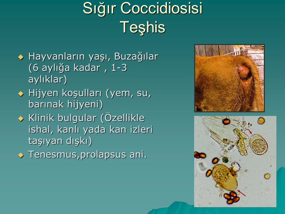 Sığır Coccidiosisi Teşhis