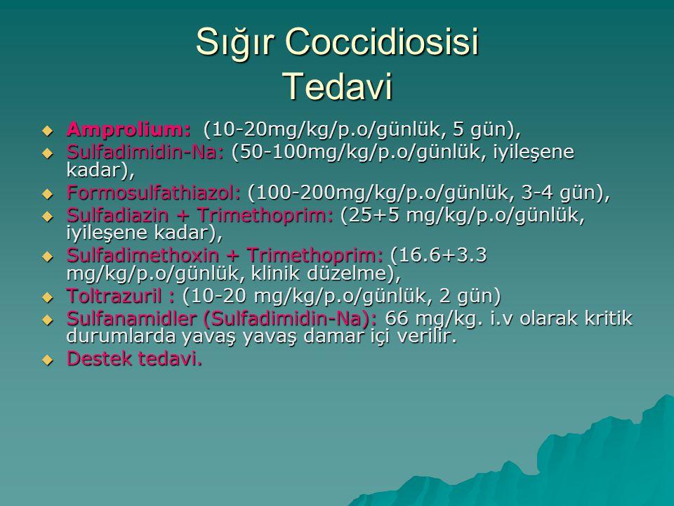 Sığır Coccidiosisi Tedavi