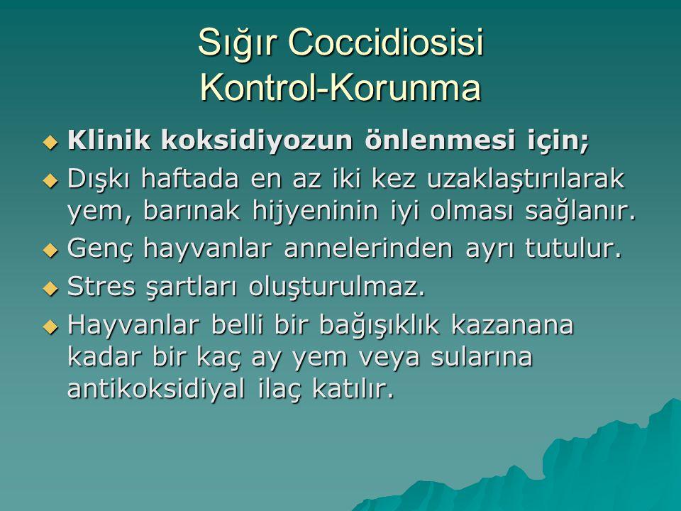 Sığır Coccidiosisi Kontrol-Korunma