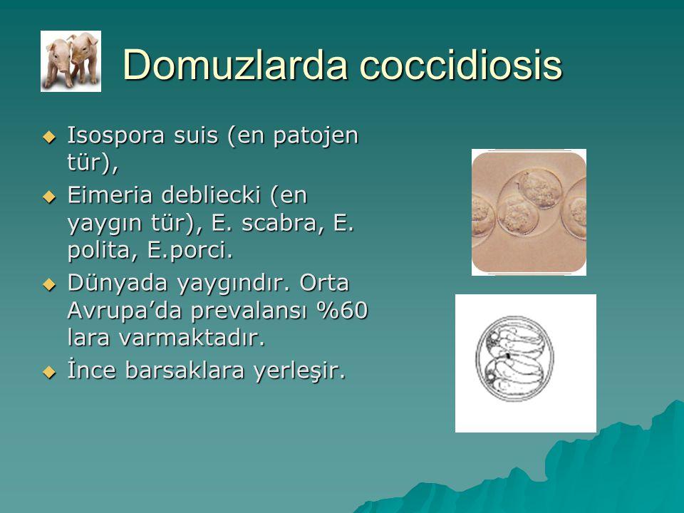 Domuzlarda coccidiosis