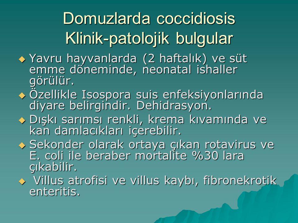 Domuzlarda coccidiosis Klinik-patolojik bulgular