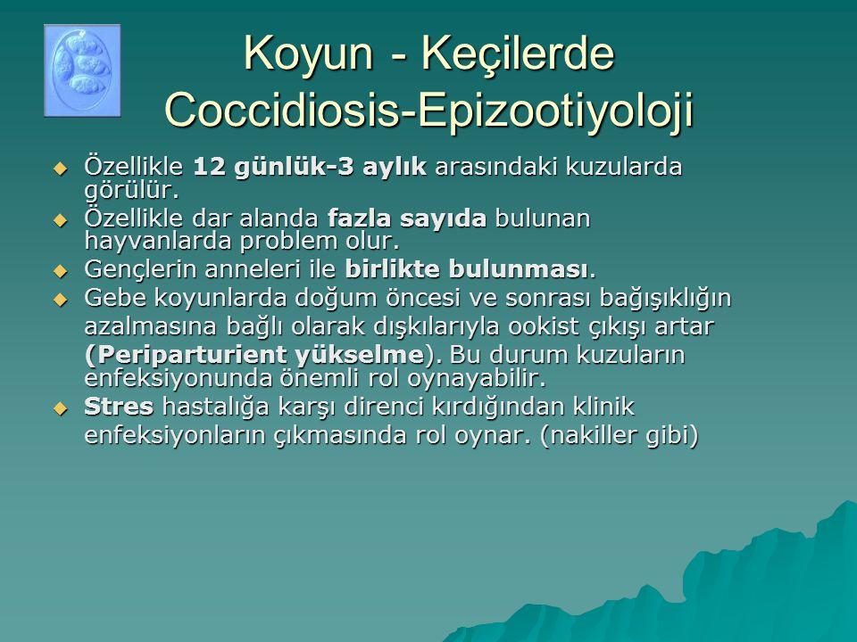 Koyun - Keçilerde Coccidiosis-Epizootiyoloji