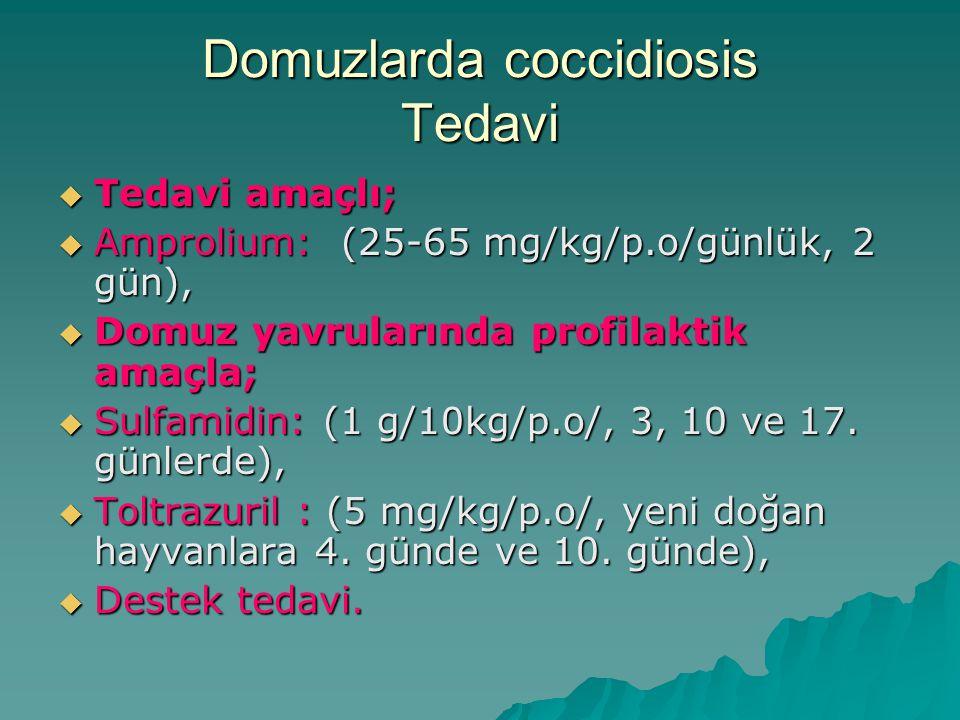 Domuzlarda coccidiosis Tedavi