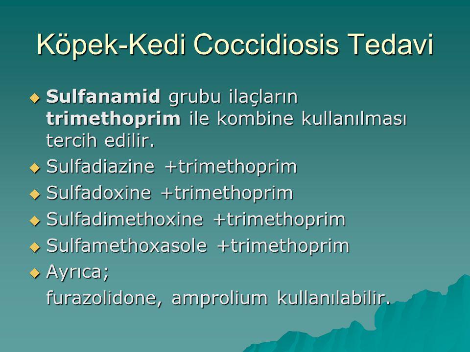 Köpek-Kedi Coccidiosis Tedavi