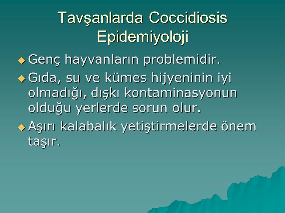 Tavşanlarda Coccidiosis Epidemiyoloji