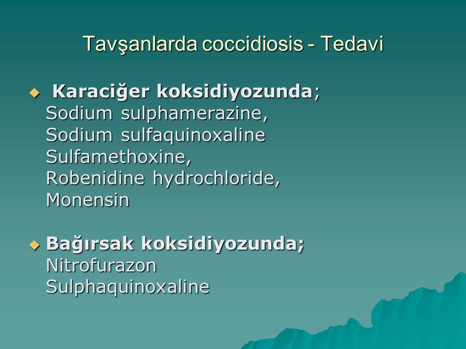 Tavşanlarda coccidiosis - Tedavi