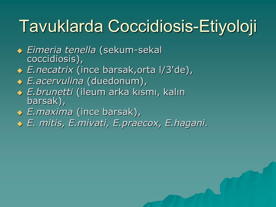 Tavuklarda Coccidiosis-Etiyoloji