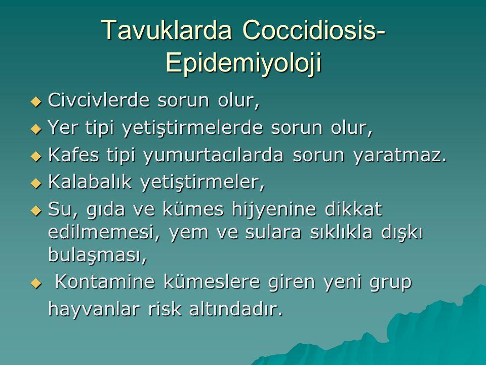 Tavuklarda Coccidiosis-Epidemiyoloji