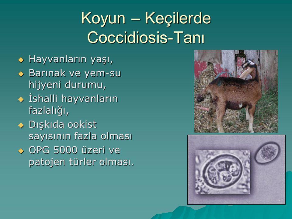 Koyun – Keçilerde Coccidiosis-Tanı