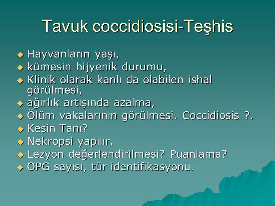 Tavuk coccidiosisi-Teşhis