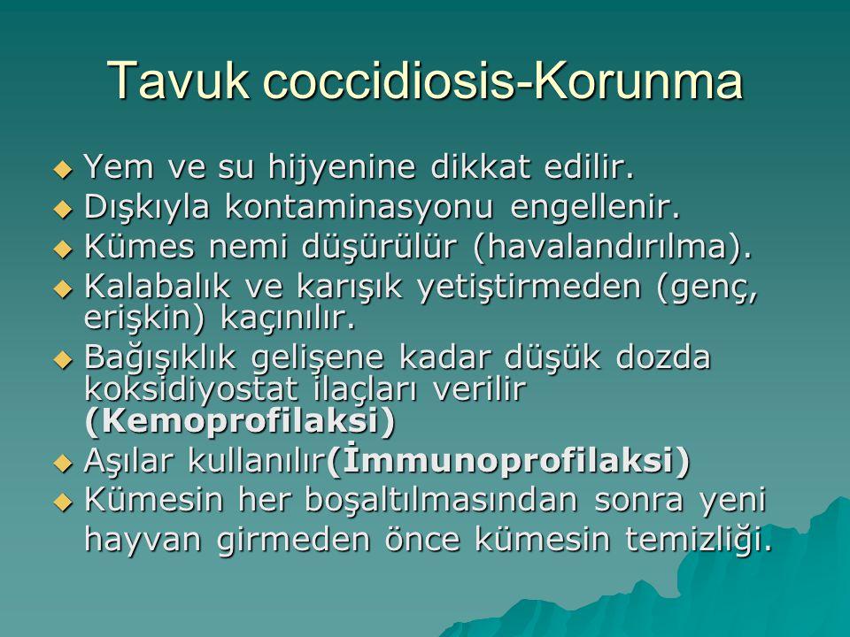 Tavuk coccidiosis-Korunma