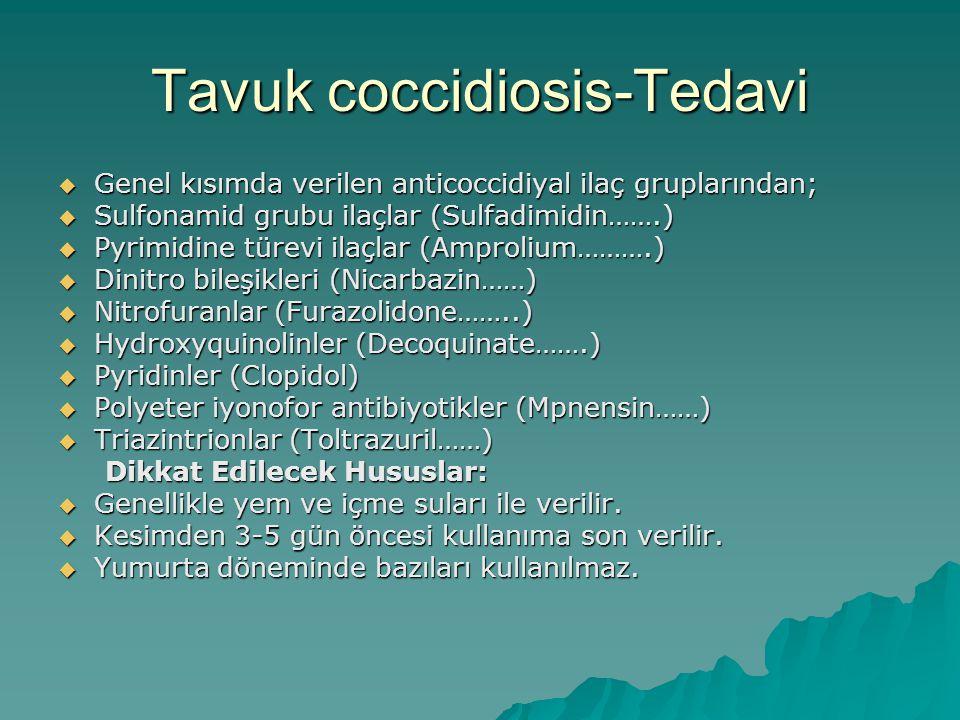 Tavuk coccidiosis-Tedavi
