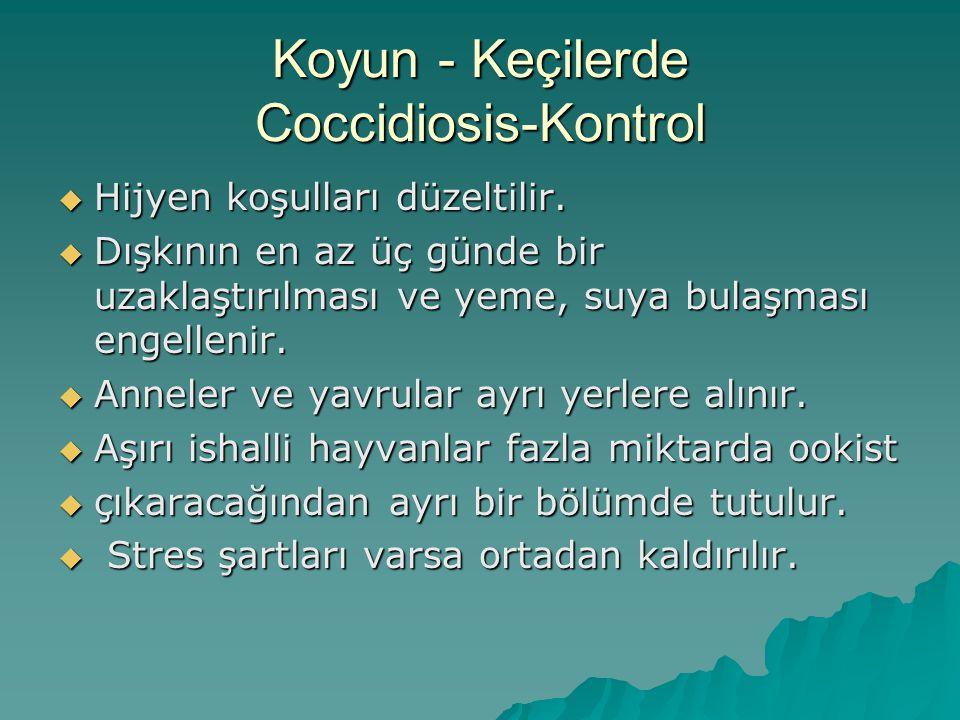 Koyun - Keçilerde Coccidiosis-Kontrol