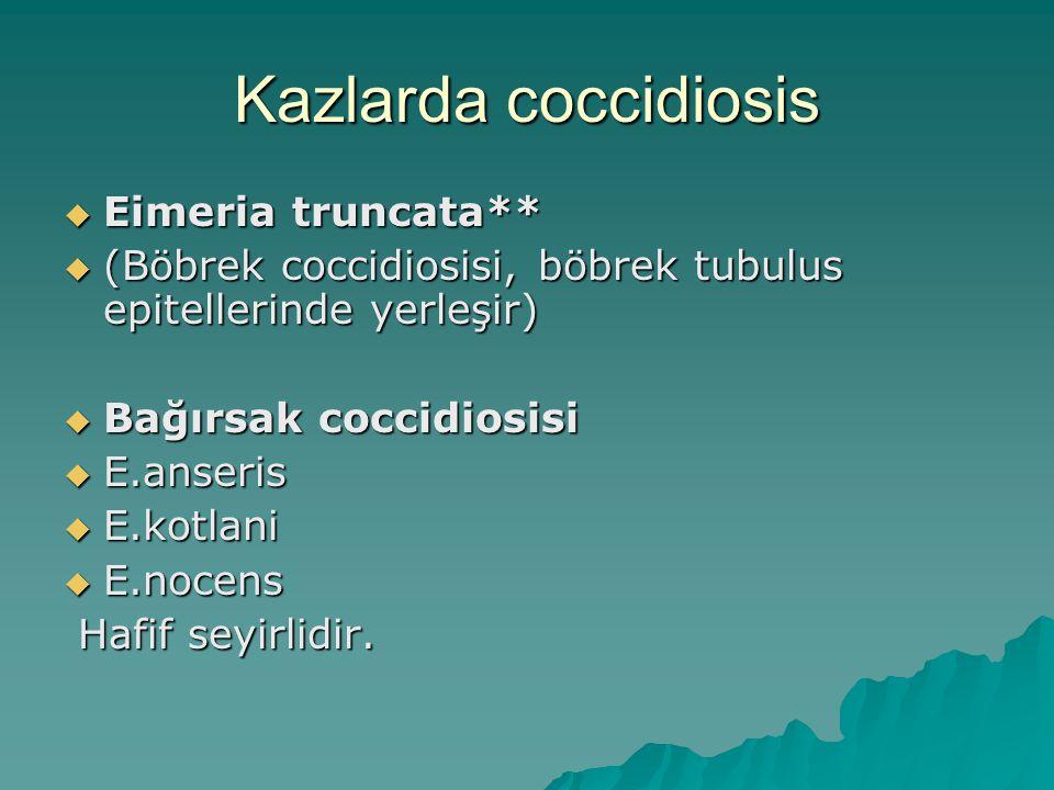 Kazlarda coccidiosis Eimeria truncata**