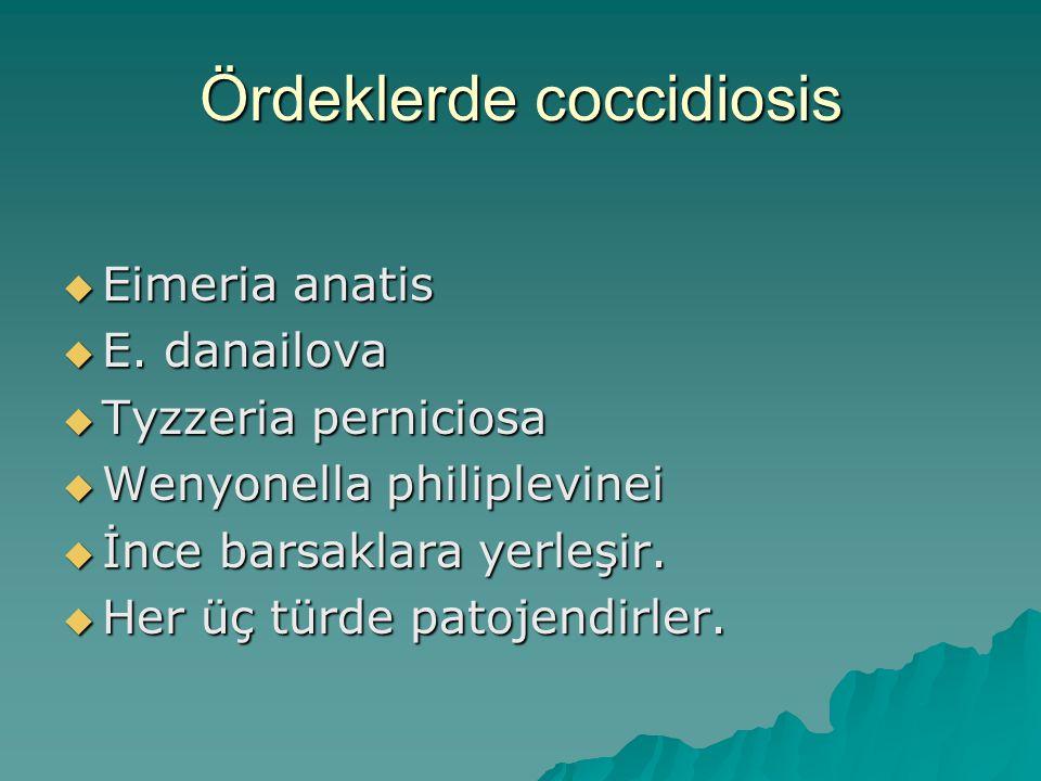 Ördeklerde coccidiosis
