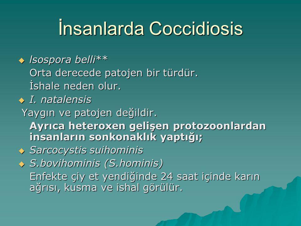 İnsanlarda Coccidiosis