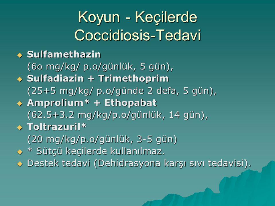 Koyun - Keçilerde Coccidiosis-Tedavi