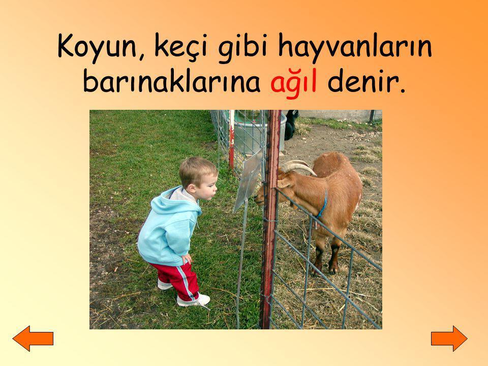 Koyun, keçi gibi hayvanların barınaklarına ağıl denir.
