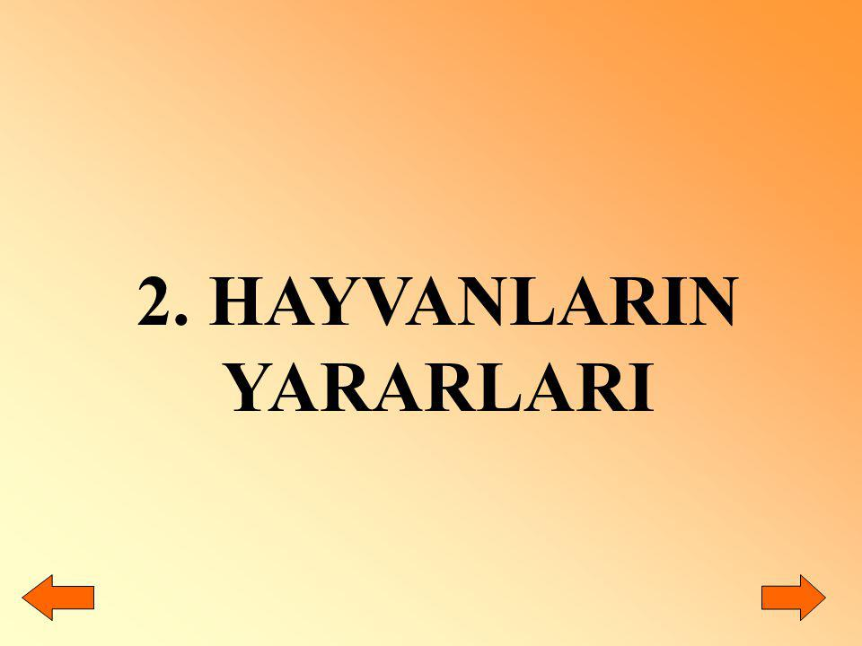 2. HAYVANLARIN YARARLARI