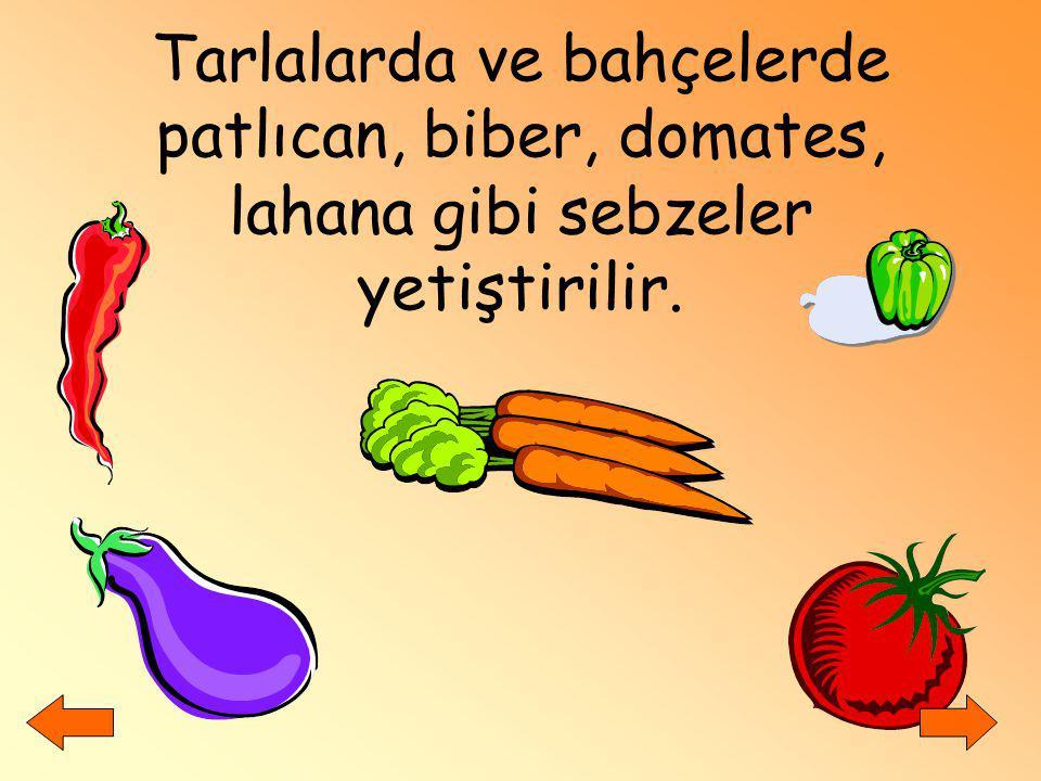 Tarlalarda ve bahçelerde patlıcan, biber, domates, lahana gibi sebzeler yetiştirilir.
