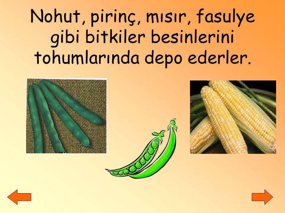 Nohut, pirinç, mısır, fasulye gibi bitkiler besinlerini tohumlarında depo ederler.