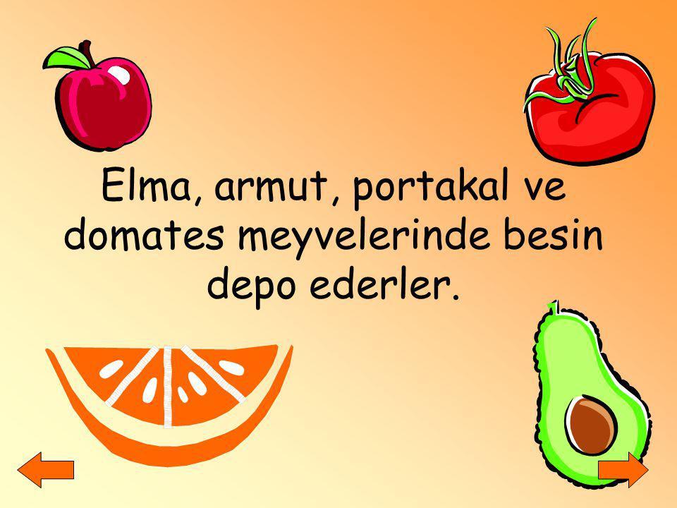 Elma, armut, portakal ve domates meyvelerinde besin depo ederler.