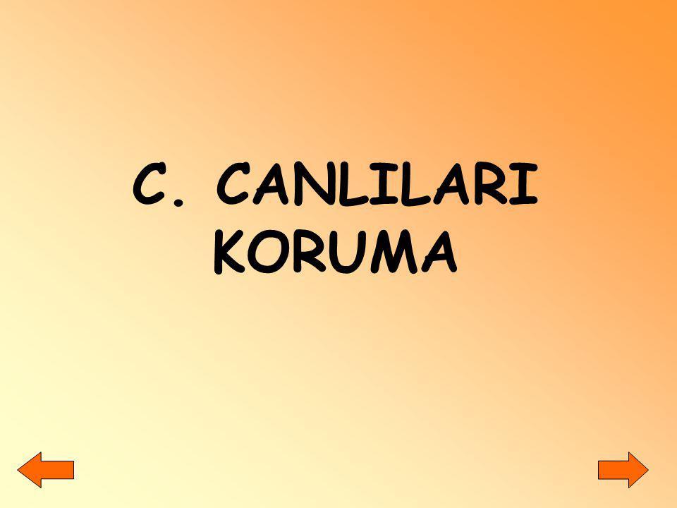 C. CANLILARI KORUMA