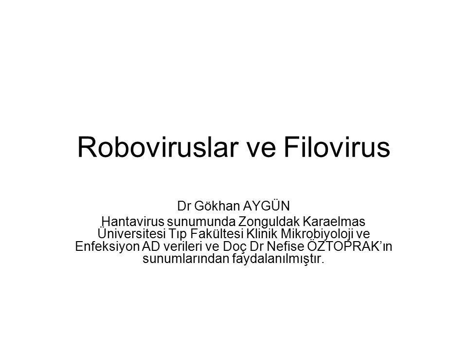 Roboviruslar ve Filovirus