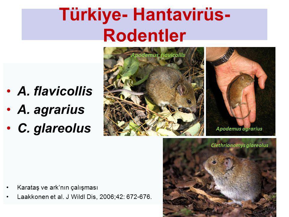 Türkiye- Hantavirüs- Rodentler