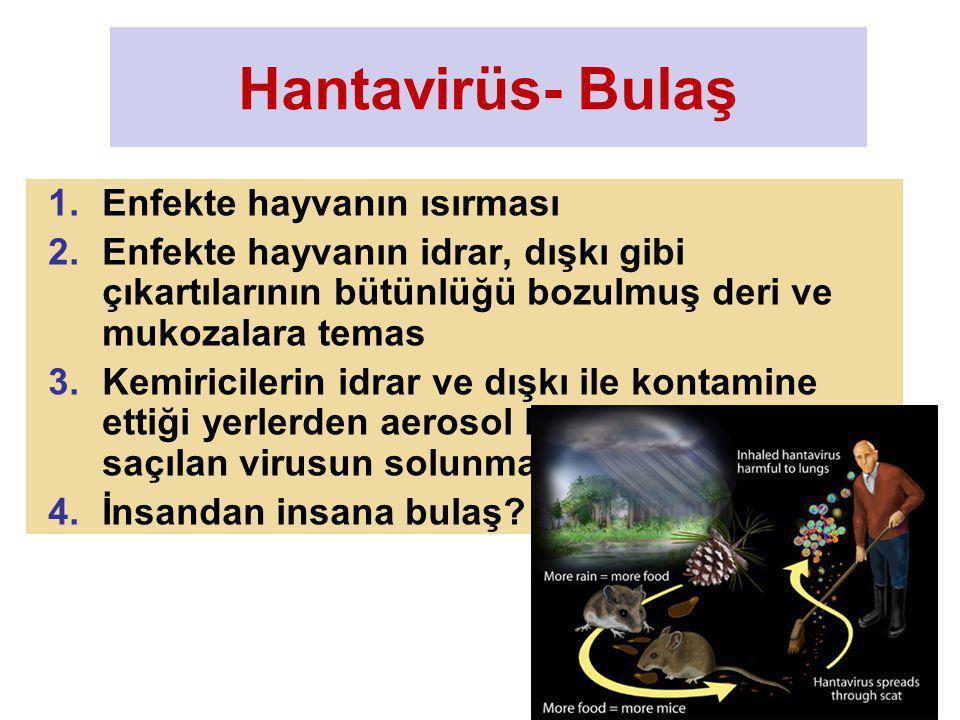 Hantavirüs- Bulaş Enfekte hayvanın ısırması