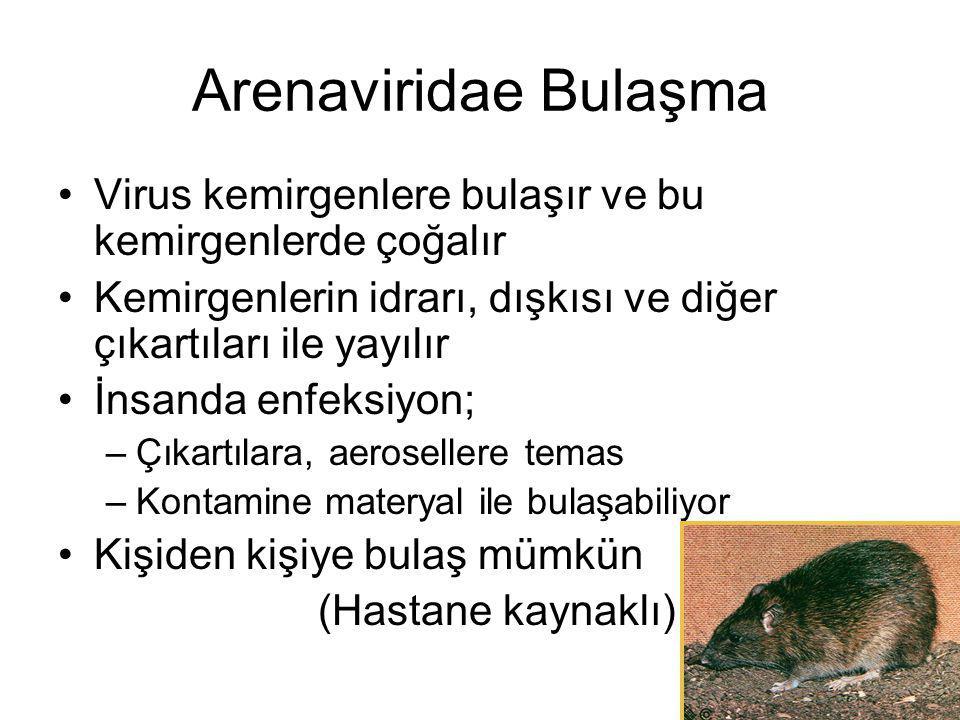 Arenaviridae Bulaşma Virus kemirgenlere bulaşır ve bu kemirgenlerde çoğalır. Kemirgenlerin idrarı, dışkısı ve diğer çıkartıları ile yayılır.