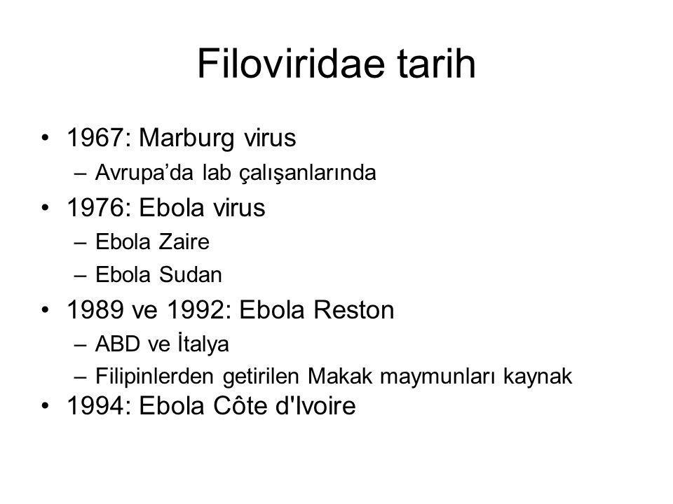 Filoviridae tarih 1967: Marburg virus 1976: Ebola virus