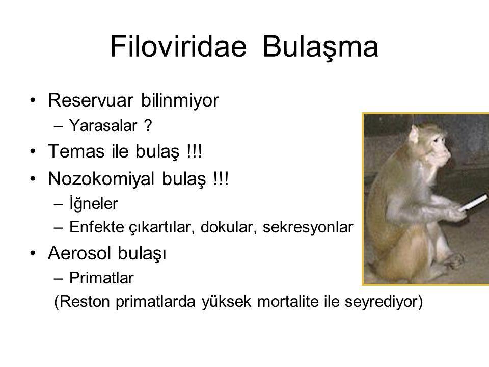 Filoviridae Bulaşma Reservuar bilinmiyor Temas ile bulaş !!!