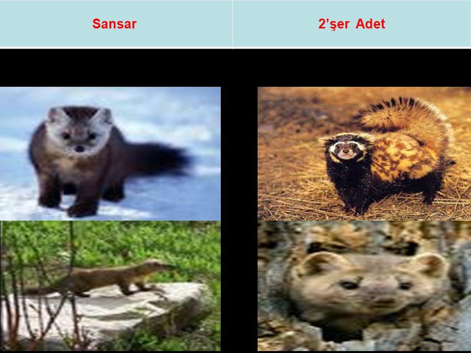 Sansar 2'şer Adet