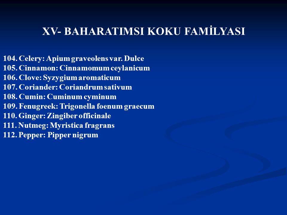XV- BAHARATIMSI KOKU FAMİLYASI
